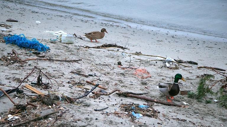 nedskräpad strand