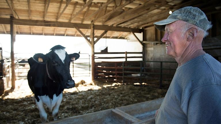 Mjölkbonde och ko