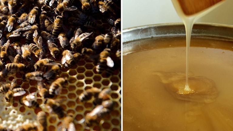 Till vänster bild på bin, till höger bild på droppande honung