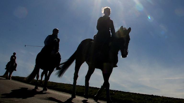Ryttare på hästar.