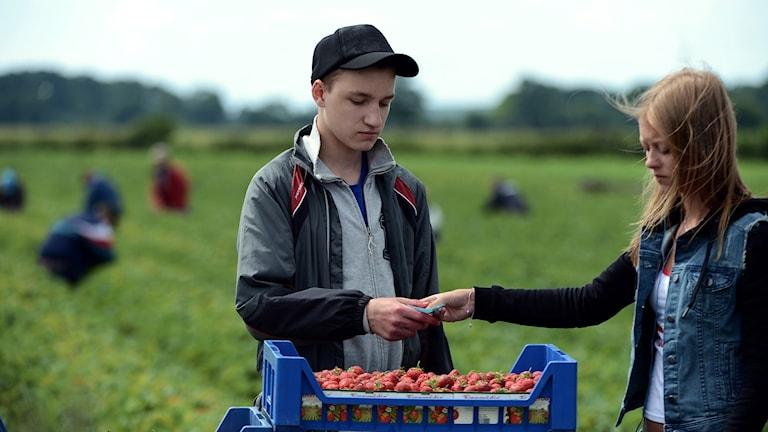 En kille och en tjej framför en låda med jordgubbar.
