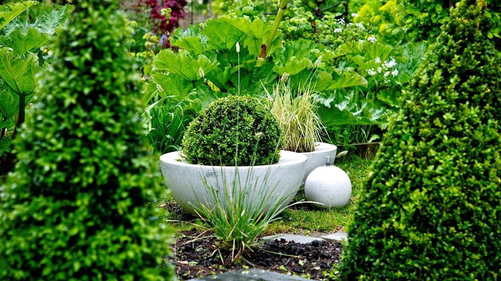 Gröna växter i en trädgård.