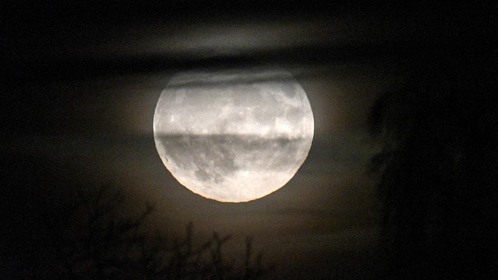 En fullmåne.