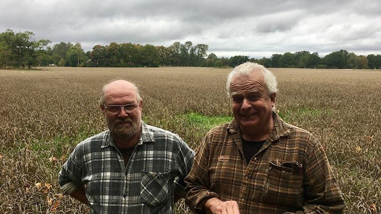 Lantbrukarna Magnus Andersson och Staffan Lindwall står framför ett stort fält med korn.