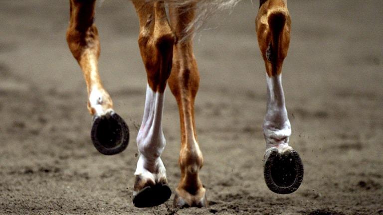 Hovar på häst som springer. Foto: Jessica Gow/Scanpix