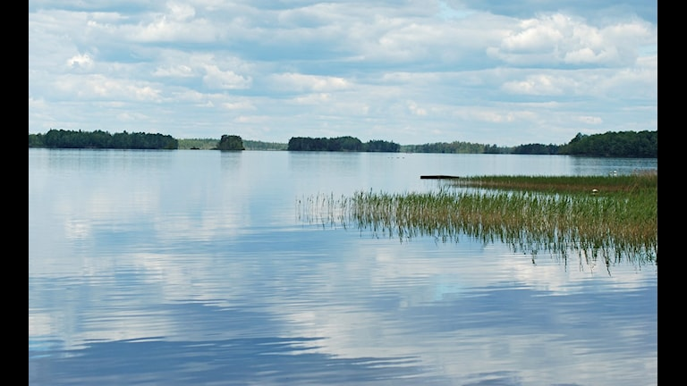 Sjön Möckeln. Foto: Rikard Persson/Sveriges Radio.