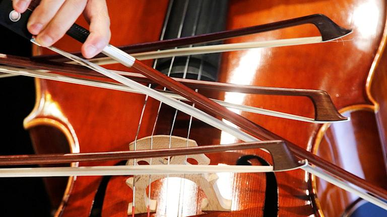 Fyra stråkar på en cello, närbild.