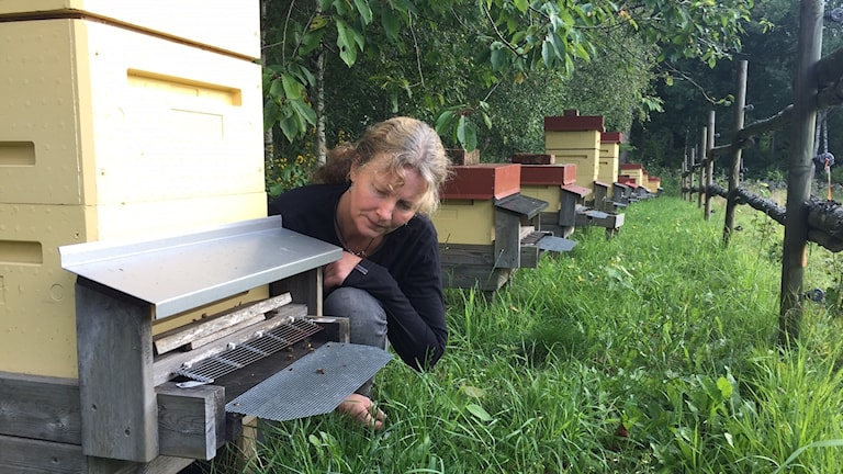Biodlare Laila Lycksson sitter framför öppningen vid en av sina bikupor.