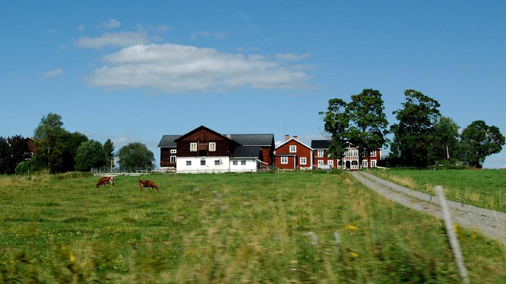 Foto: Hasse Holmberg/Scanpix