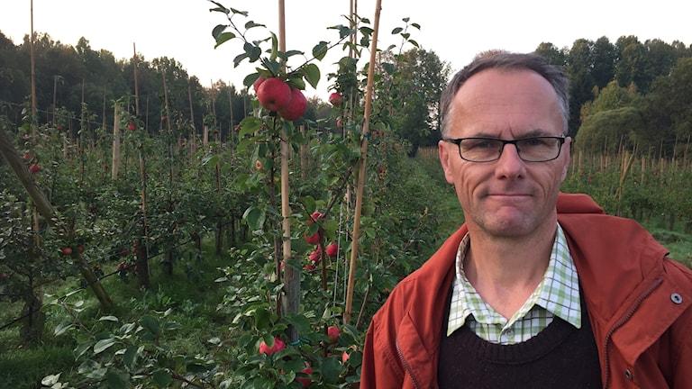 Björn Idlinge, äppelodlare på Vemboö