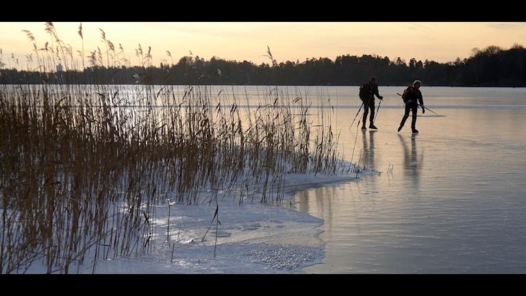 På bilden syns två personer som åker långfärdsskridskor på en sjö. Foto: Lars Pehrson/Svd/Scanpix