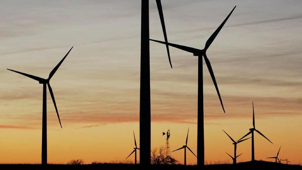 Vindkraft. Foto: AP Photo/Orlin Wagner (bilden är beskuren)