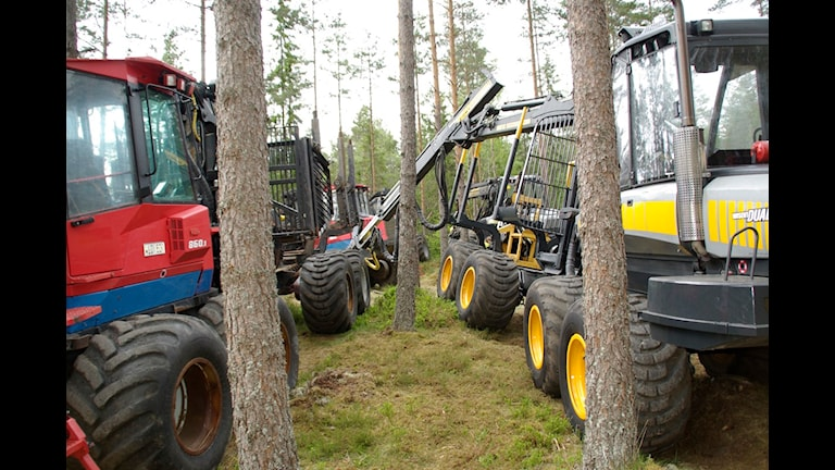 Allt fler skogsmasiner kör i skogen