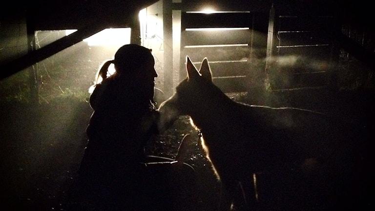Ingemar får använda bilens lysen för ljusa upp hundrastgården. Foto: Lyssnarbild