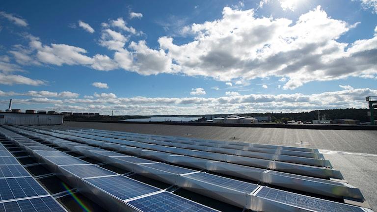Ett gäng solceller. Foto: TT