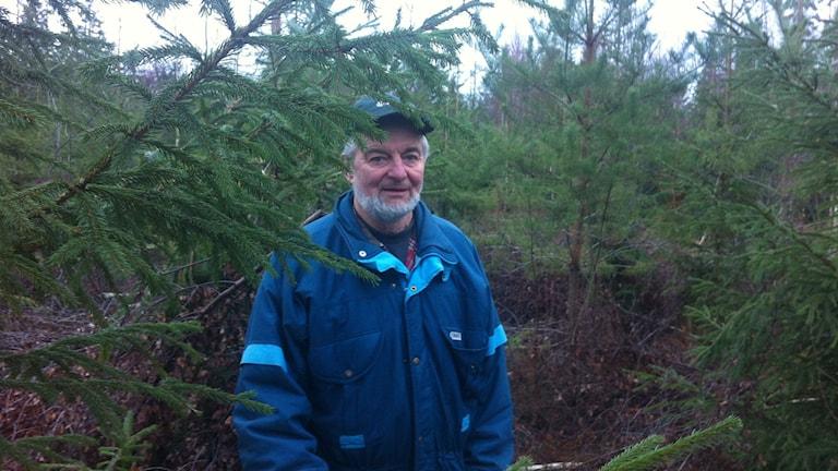 Det finns inget bättre alternativ än gran, säger skogsägaren Arne Kalrsson. Foto: Tomas Lindberg/Sveriges Radio