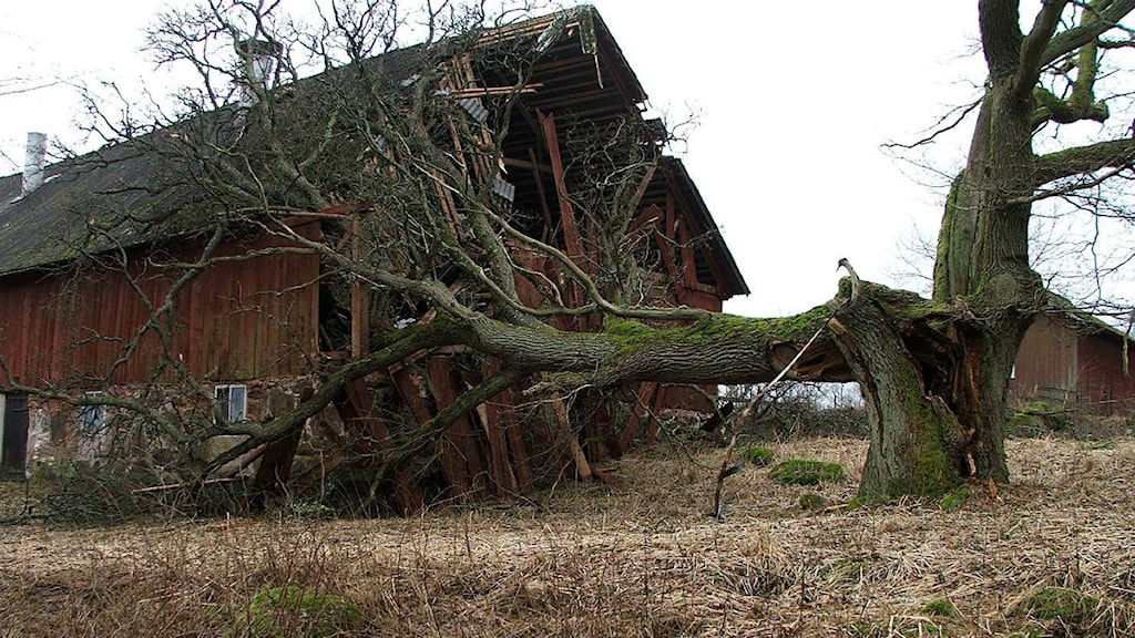 En ladugård i Agunnarydstrakten efter stormen. Lyssnarfoto: Tommy Andersson