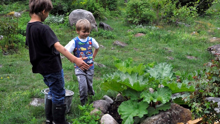 Två barn kollar in en del av ett odlingsland.