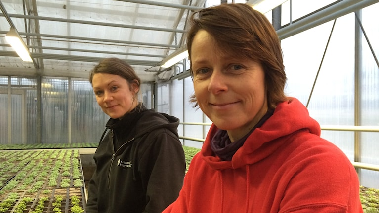 """Julia Österdahl och Ida Engberg i """"barnkammaren"""" i Växjö kommuns växthus. Foto: Petra Ekelöf/ Sveriges Radio"""