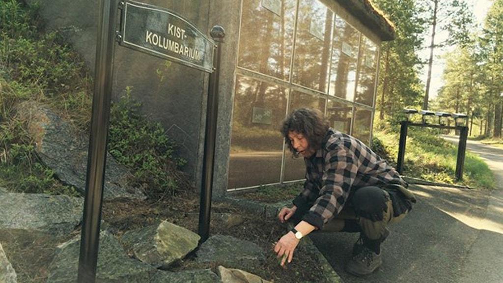 Tallskogen speglar sig i kolumbariumets slipade granitskivorna. Förmannen Lotta Lovén Ahlberg rensar ogräs. Foto: Tomas Lindberg/Sveriges Radio