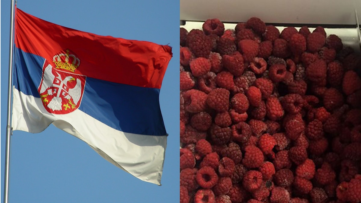 Den serbiska flaggan och ett gäng frusna hallon.