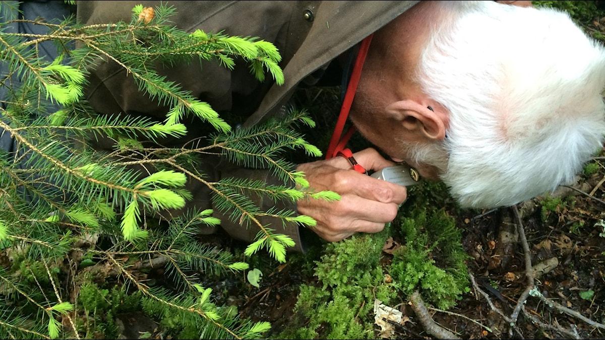 Man inspekterar på nära håll växter