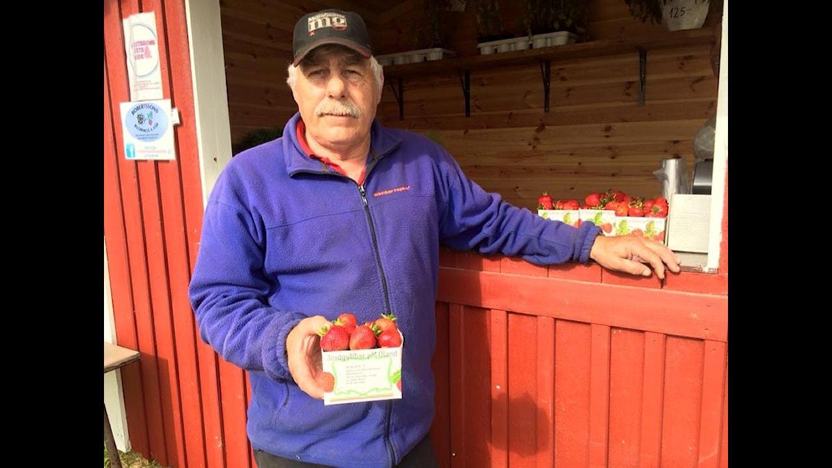 Jordgubbsförsäljaren Hasse Karlsson kör ut jordgubbarna inför midsommar på Öland.