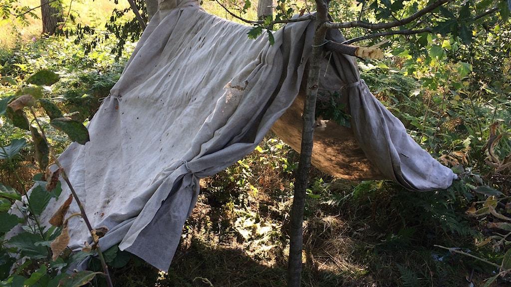 Ett övergivet tält