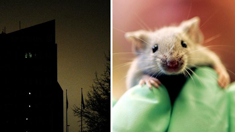 Ett strömlöst hus och en mus