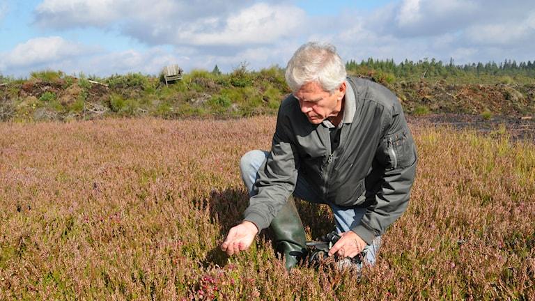 Sven Olsson mit seinen Früchtchen (Foto:Tomas Lindberg/SR)