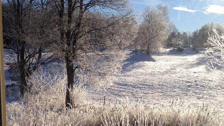 Ett vitt snöigt landskap