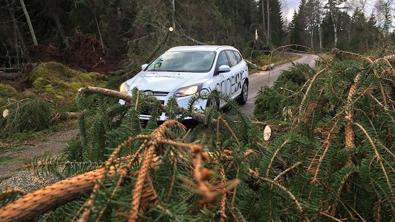 Radiobilen på en väg där träd fallit.
