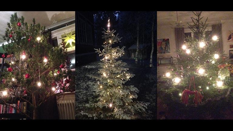 Några av Johanna Wallins sex julgranar. Foto: Privat