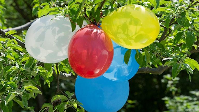 Ballonger i ett träd