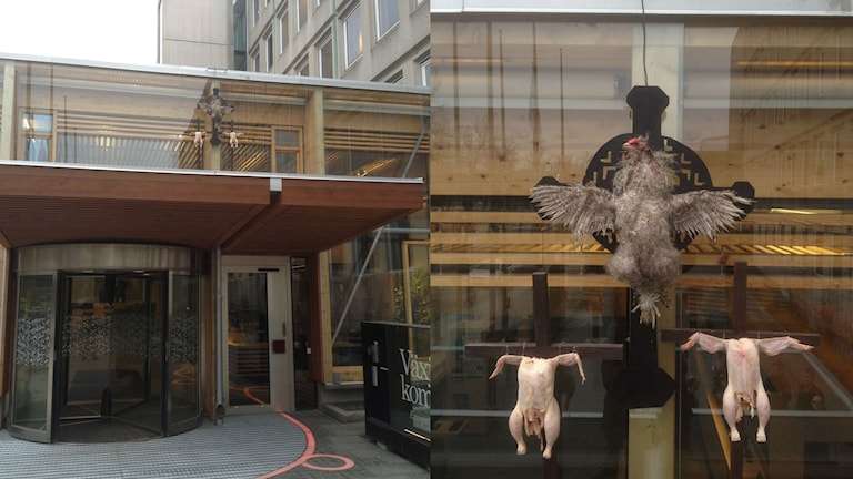 En död höna och två kycklingar har spikats upp på kommunhuset