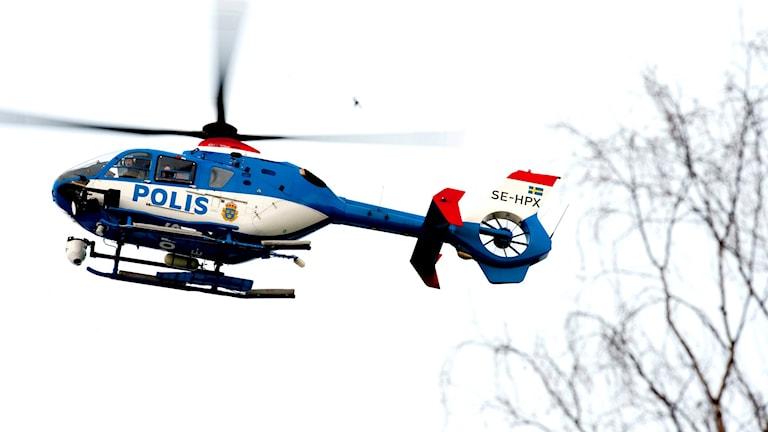 En polishelikopter cirkulerar ovanför träd.
