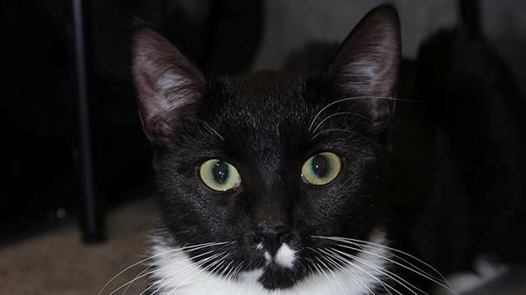 Katten Luna