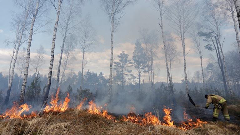 Gräsbrand Göteborg