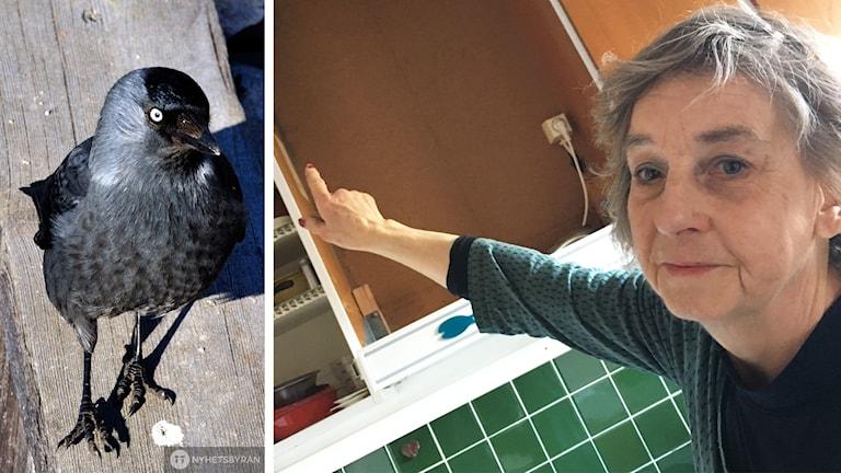 Montage. Till vänster en bild på en Kaja och till höger Mona Nilsson som pekar mot sin spisfläkt..