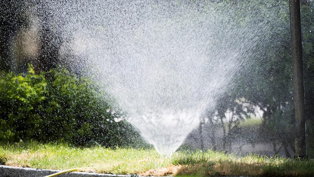 En vattenspridare vattnar en villaträdgård-