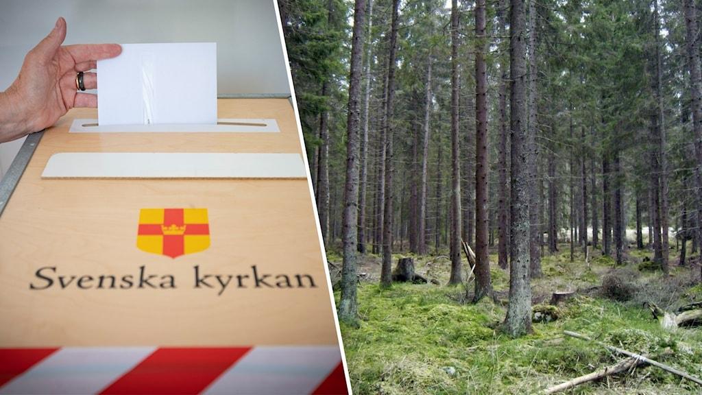En person röstar i kyrkovalet. Bild på skog till höger.
