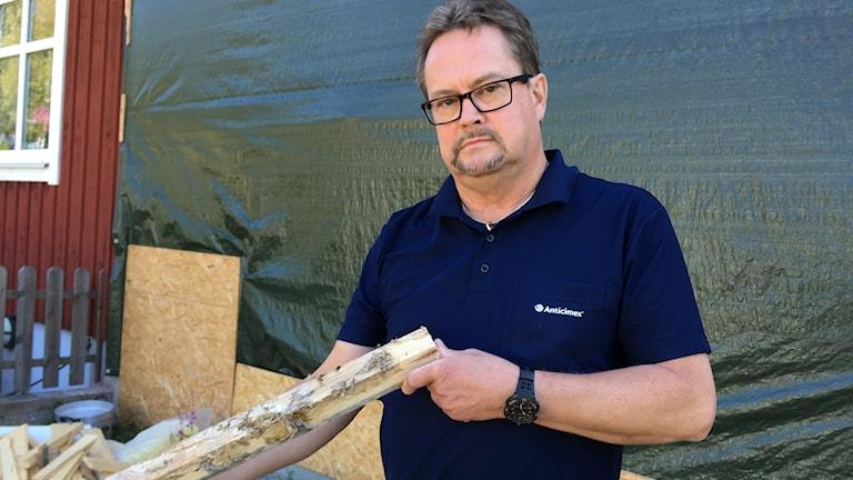 En man håller i en bit trä som angripits av hussvamp