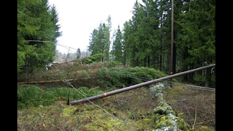 Träd har fallit över ledningar.