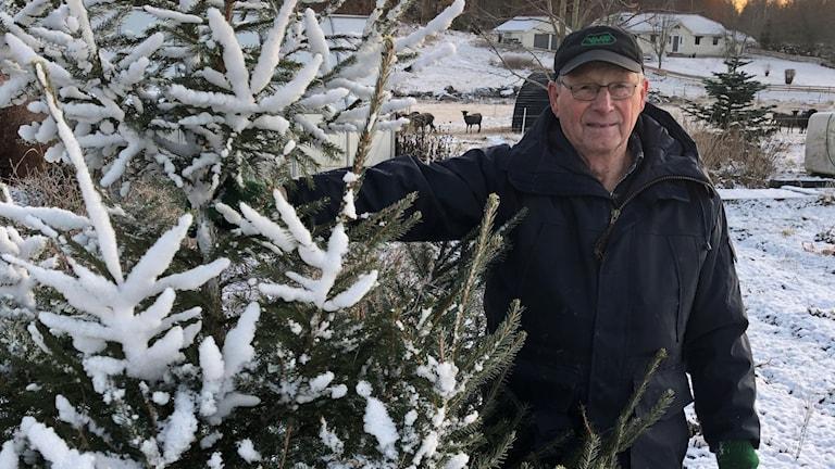 Uno Axelsson, granodlare, håller i en gran som är täckt av snö.