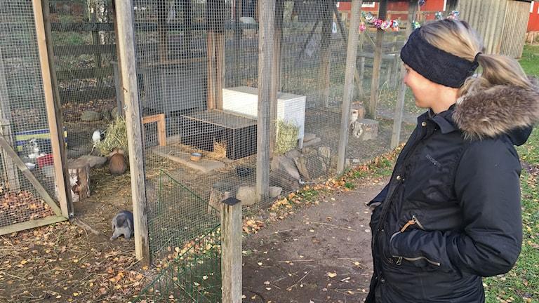 Sofia Lindwall Ek tittar på kaninburen med flera kaniner i. Utomhus.