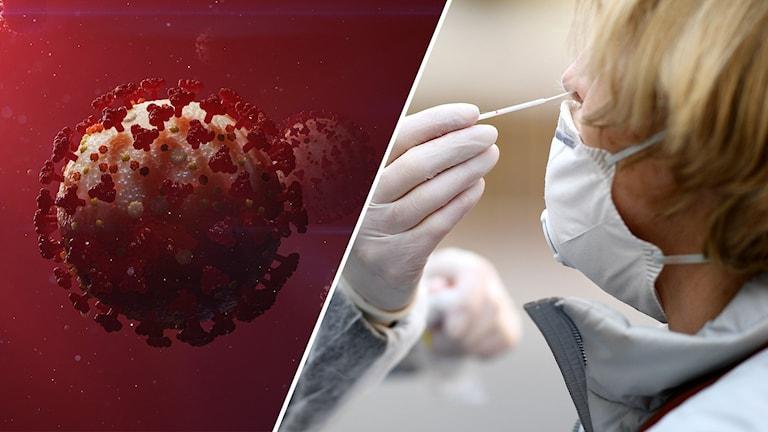 coronavirus, provtagning