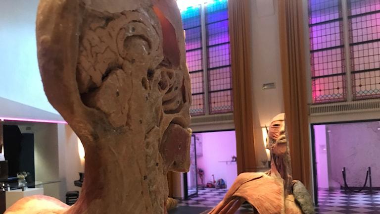 människokroppar visas upp i en utställning i Växjö