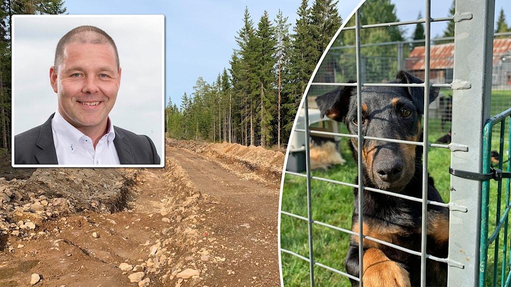 Dan Sandros infälld i en bild på exploateringsmark. En hund i en hundkennel till höger.