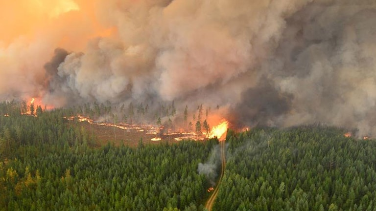 En av brandhärdarna vid skogsbranden i Västmanland.