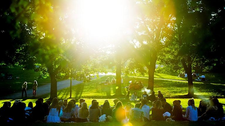 Människor sitter i en park och solen lyser